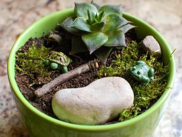Miniature Garden - pot garden (1 of 2)
