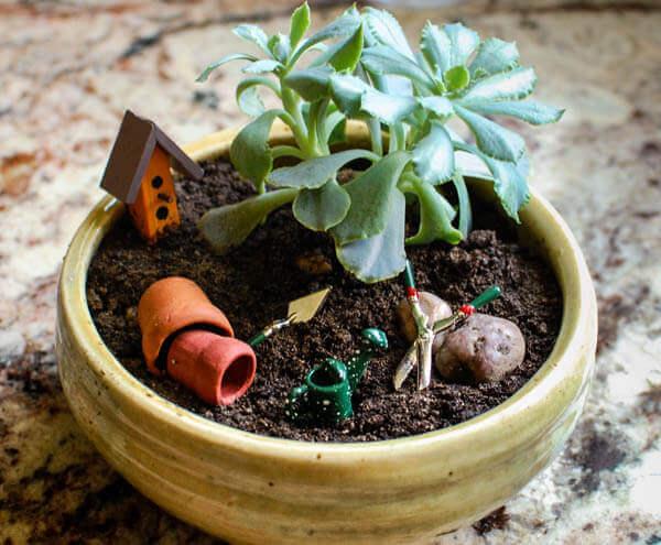 Miniature Garden - pot garden (2 of 2)