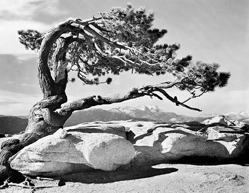 Ansel Adams Best Image?  Google It.