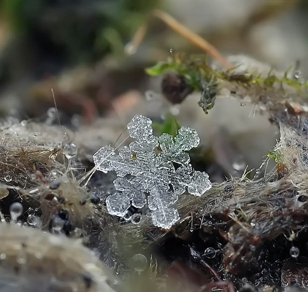Ethereal Macro Photos of Snowflakes in the Moments Before They Disappear macrosnow 10