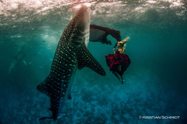 An Underwater Fashion Shoot Featuring a Whale Shark whalesharkfashionshoot 1