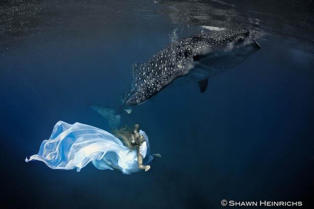 An Underwater Fashion Shoot Featuring a Whale Shark whalesharkfashionshoot 4
