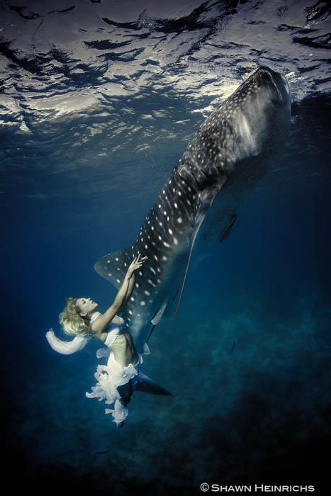 An Underwater Fashion Shoot Featuring a Whale Shark whalesharkfashionshoot 5
