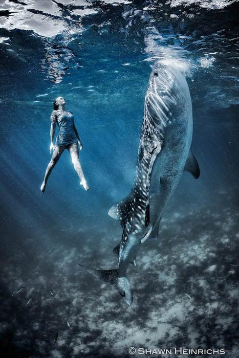 An Underwater Fashion Shoot Featuring a Whale Shark whalesharkfashionshoot 6