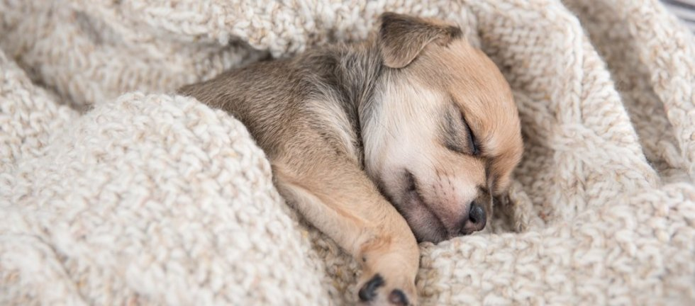 How to Get Your Puppy to Sleep at Night