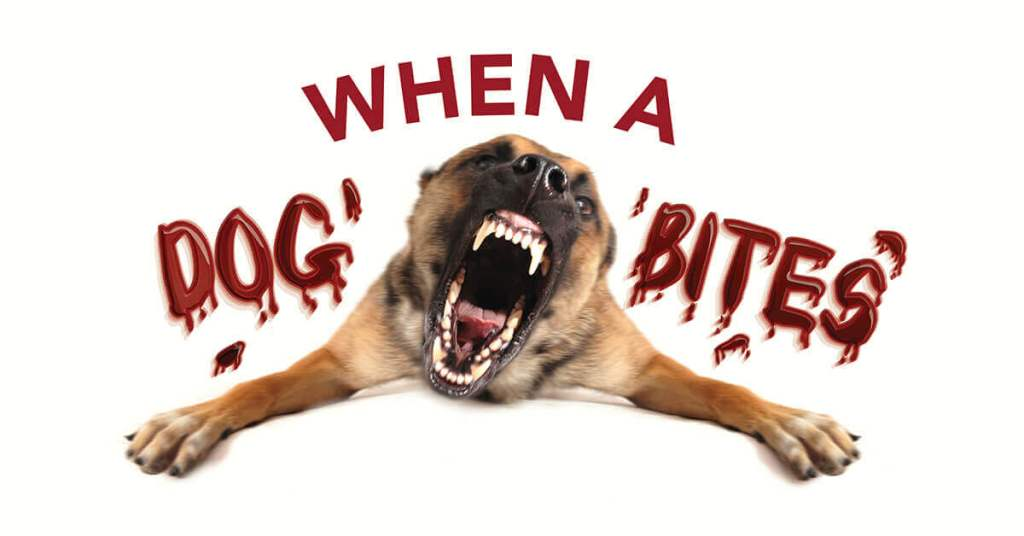 When A Dog Bites