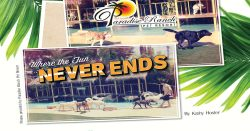 Paradise Ranch Pet Resort: Where The Fun Never Ends