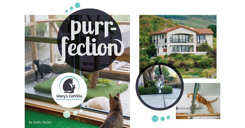 Purrfection: Mary's CatVilla