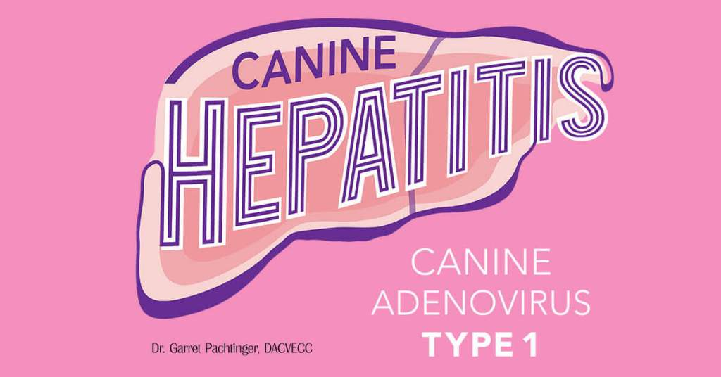 Canine Hepatitis: Canine Adenovirus Type 1