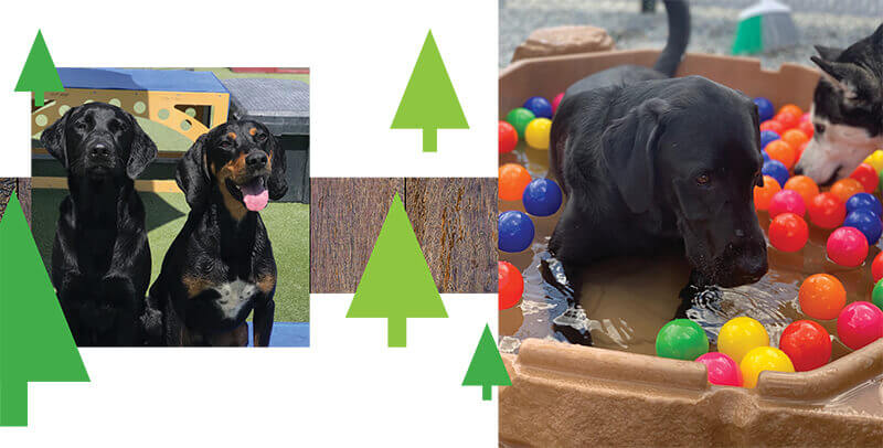 black dogs with graphic trees and one dog in a small pool of water and colorful balls