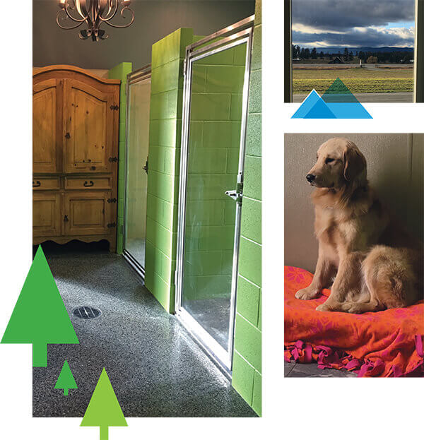 nice looking boarding kennel with green walls dog on bed