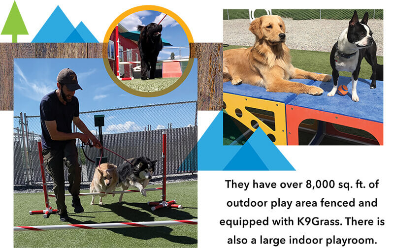 man training dogs to jump over poll two dogs on a play equipment