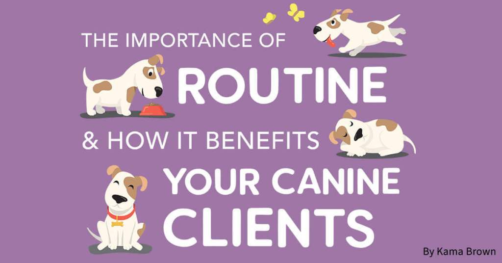 The Importance of Routine & How It Benefits Your Canine Clients
