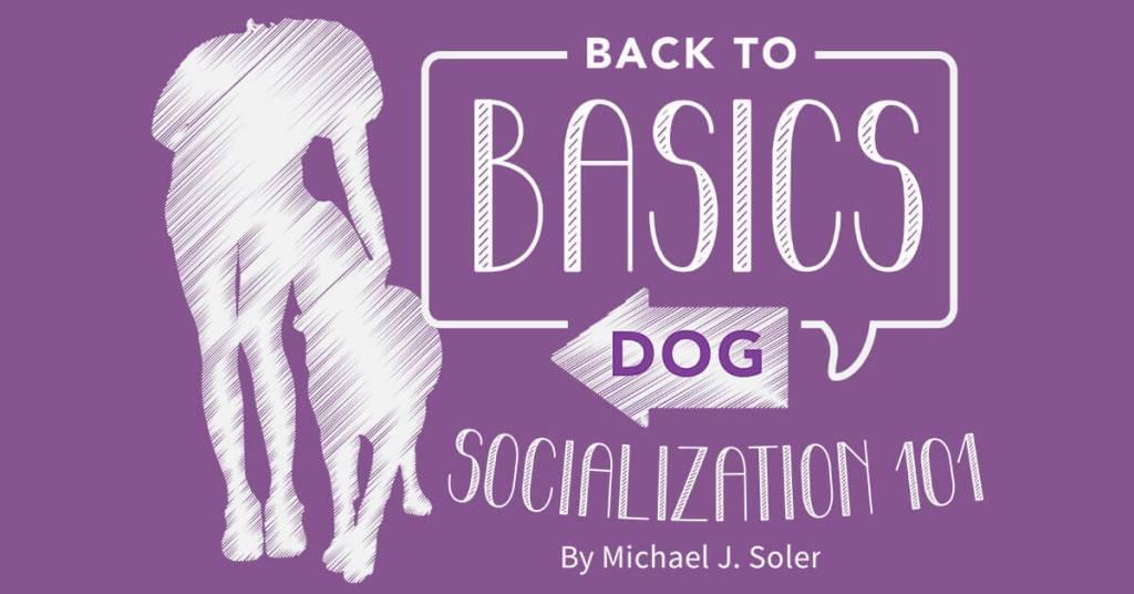 Back to Basics Dog Socialization 101