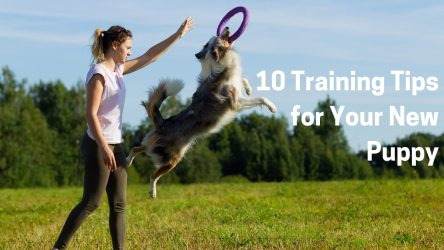 10 Training Tips for Your New Puppy
