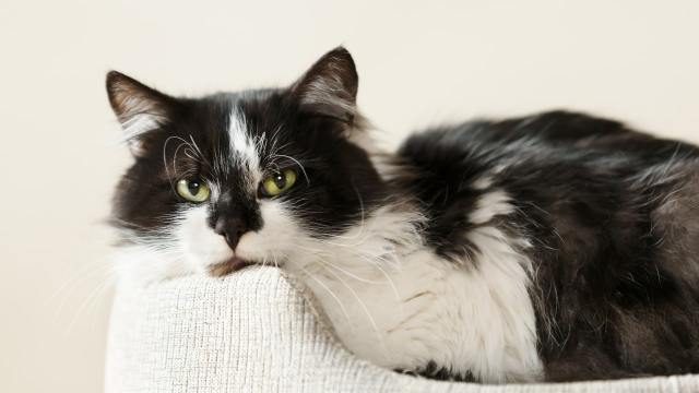 Upper Respiratory Infection cat disease