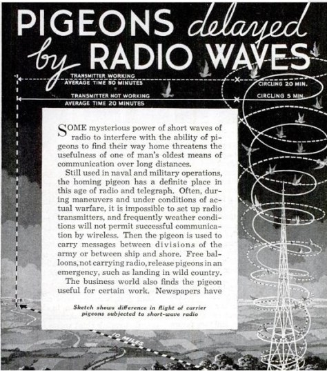 Sketch shows difference in flight of carrier pigeons subjected to short-wave radio.