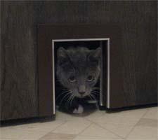 Pet Pass Thru Interior Door Pet Door Cats Small Dogs