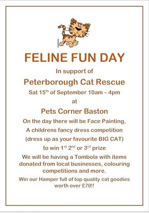 Feline Fun Day