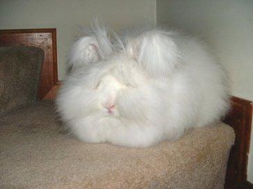 150709_jack_bunny