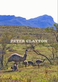 EMU & CHICKS FLINDERS RANGES - AUSTRALIA  R5