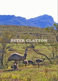EMU & CHICKS FLINDERS RANGES - AUSTRALIA  R5