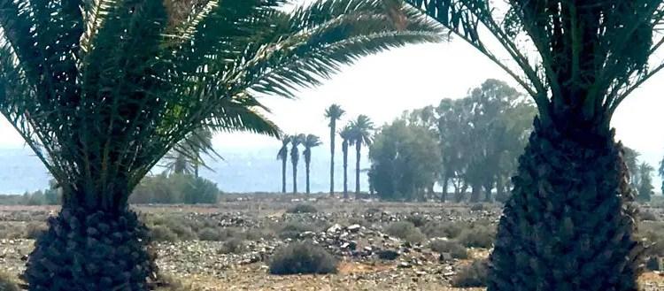 Zweimal Gran Canaria – Osterkonzert – Amadeus – und das Ende des Regenbogens