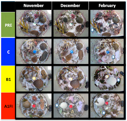 Dove PNAS 2013 results for patch reefs