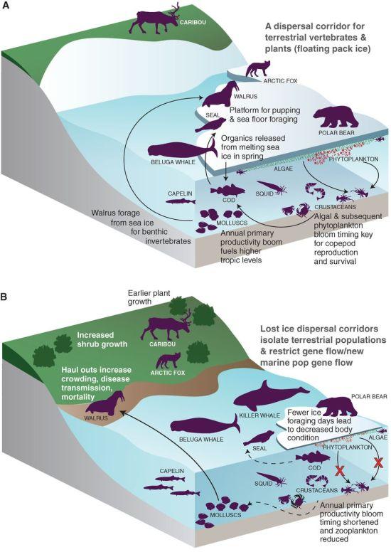 F1 sea ice loss Science
