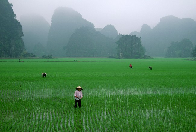 Rice-fields Vietnam Insiders Asia