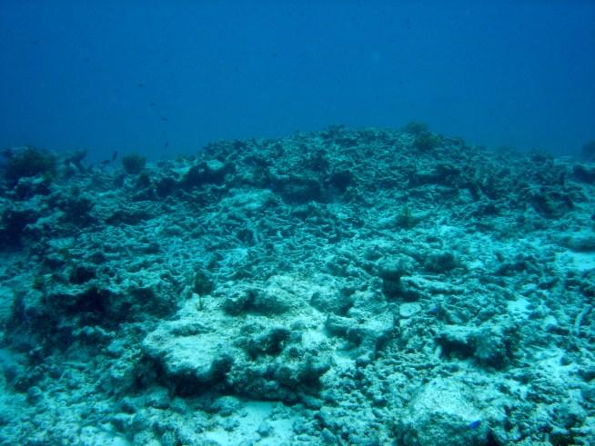 degraded-reef-2005-gbr