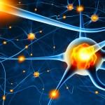 neuroplasticiteit; Het immer veranderende brein