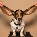 Beleefd luisteren
