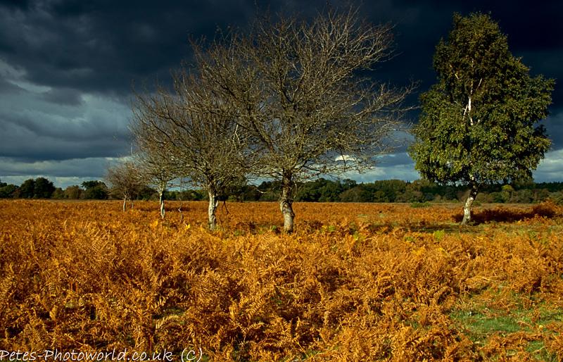 Dark Sky at Matley Wood