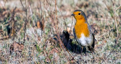 Robin spies something