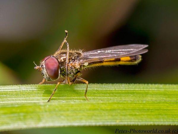 Hoverfly Leg Exercises