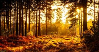 Golden Glow Filter