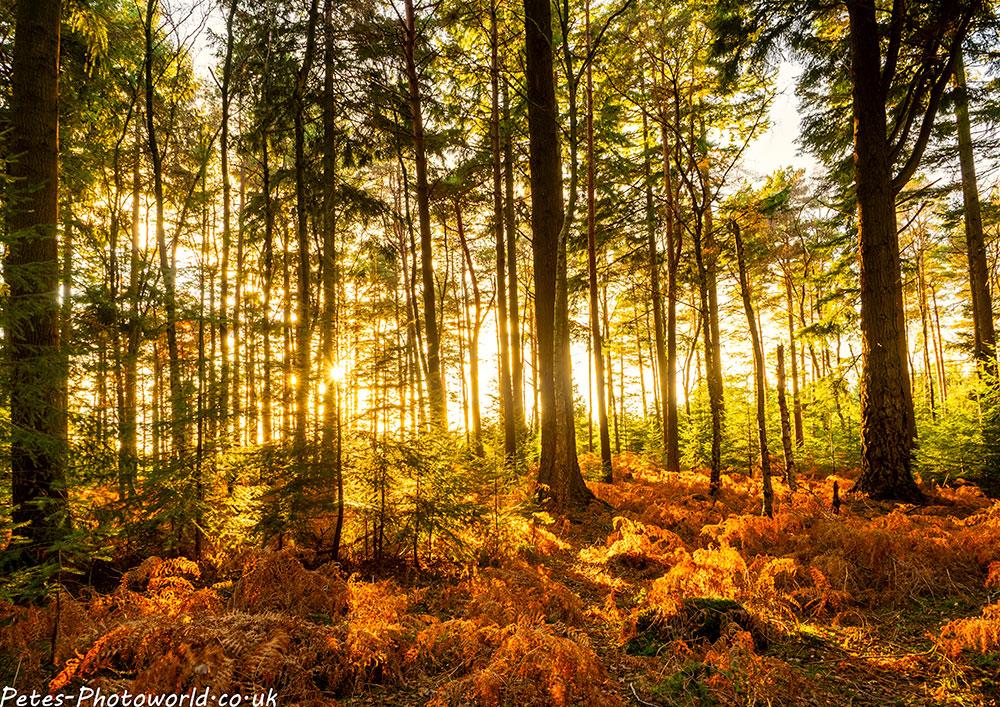 Vinney Ridge New Forest Revisited