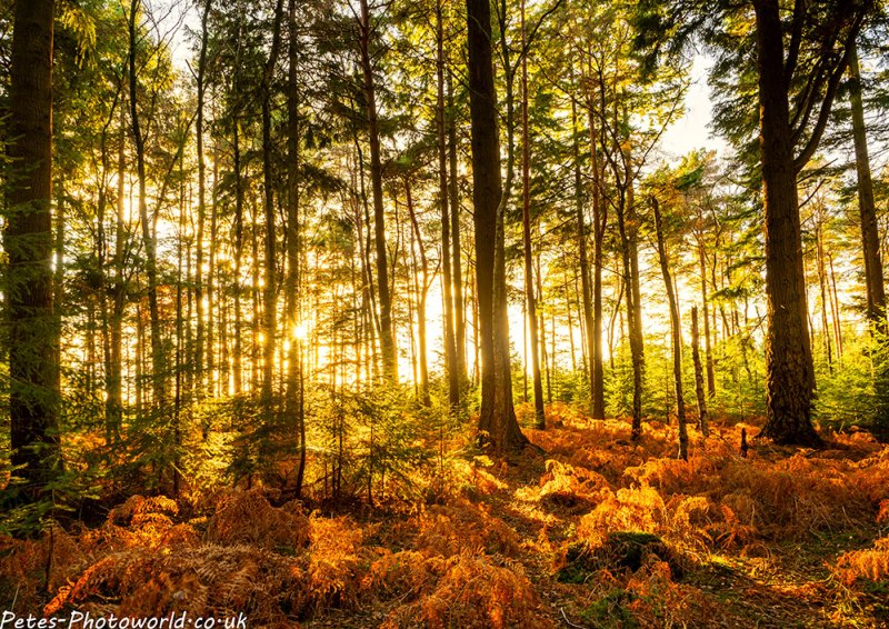 Bright Forest