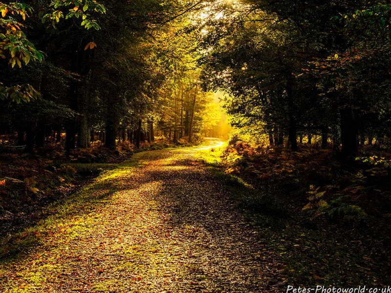 Following the path to the light