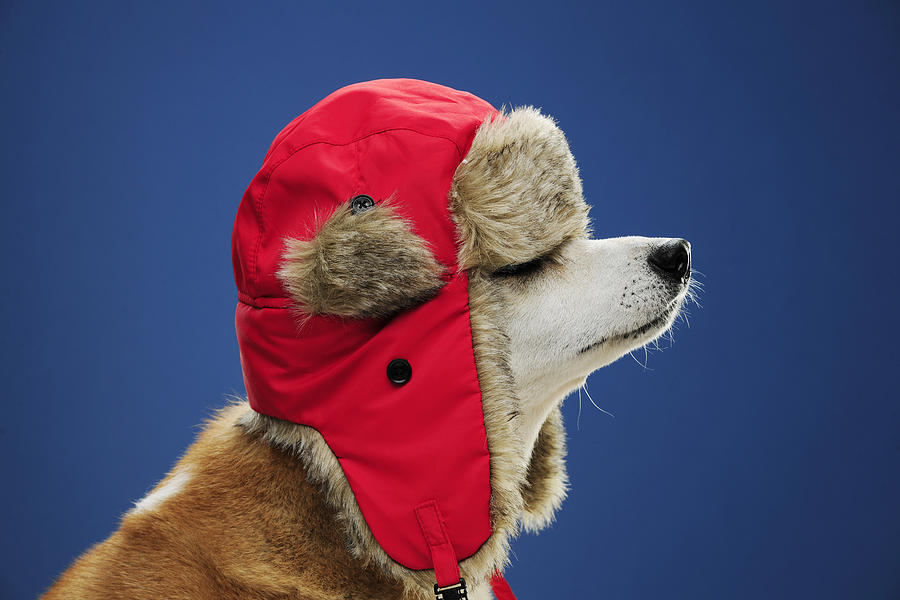 Cuidados com seu cachorro no inverno