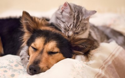 Cães e gatos podem ser amigos