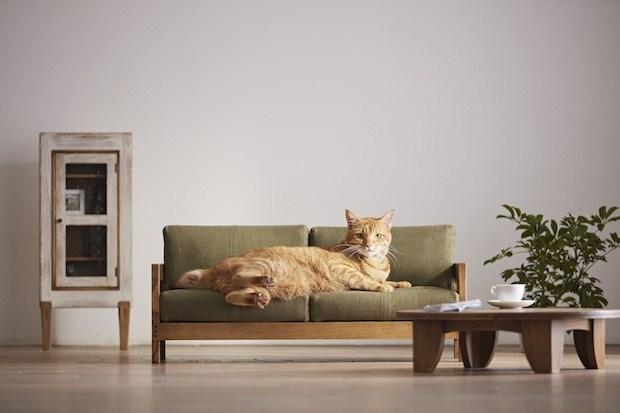 Designer cria móveis em miniatura para gatos