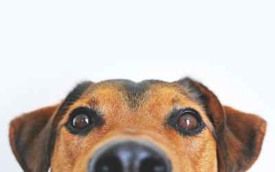 Como os cães aprendem palavras