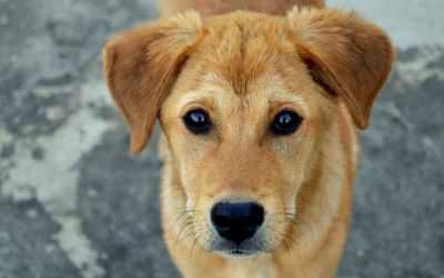 Pets exigem atenção após o período de férias