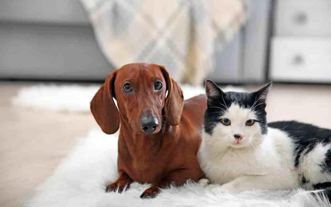 Gato ou cachorro? A resposta pode estar no seu DNA