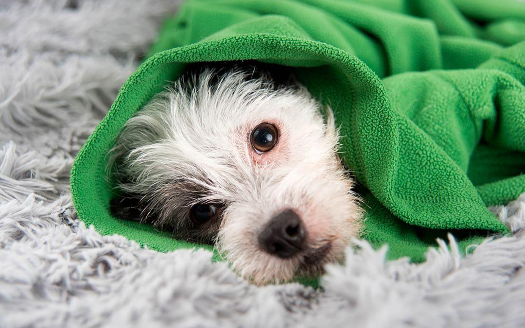 Saiba como prevenir os riscos de doenças respiratórias nos pets