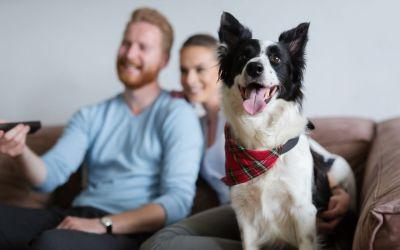 5 filmes de cachorro para quem ama animais