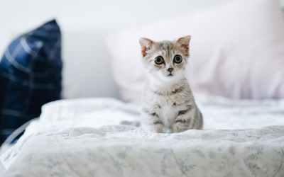 Gatos se relacionam com seus donos de maneira semelhante aos cães, diz estudo
