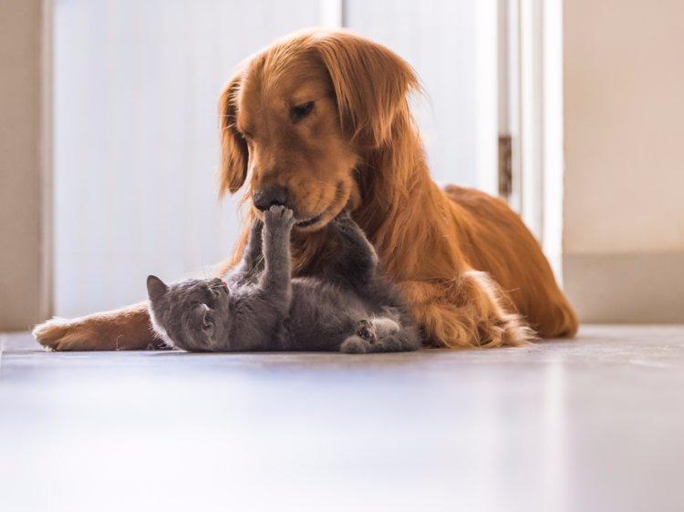 Cachorros e gatos convivendo juntos?